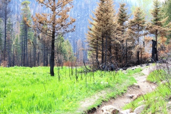 The Fern Lake Forest Fire ripped through the area by Cub Lake twice last year.
