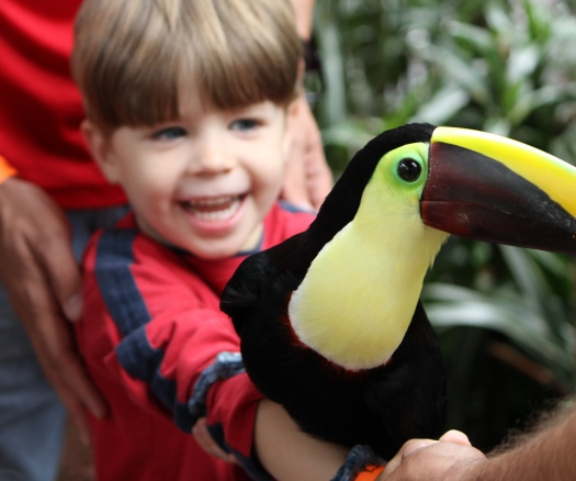 Holding a Toucan