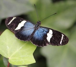 Mariposa Bella