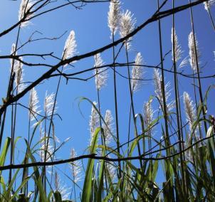 2015-01-07-1309 crop cdoc